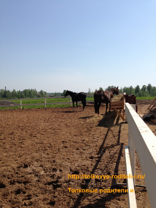 Лошади1