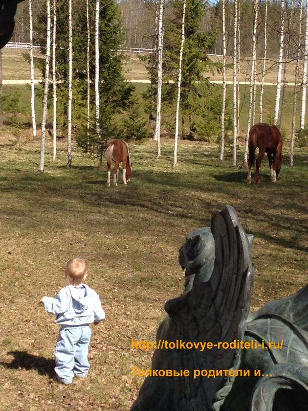 Миша и лошади